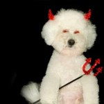 Tuesday's Top Ten:  Dogs From Hell