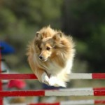 Tuesday's Top Ten:  Dog Sports
