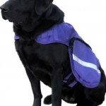 Service Dog May Be Banned from Illinois Classroom