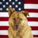 Al Franken: comedian, Senator, and now dog admirer