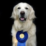 National Dog Show on TV Thursday