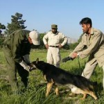 German Shepherds Carrying on Princess Diana's Landmine Work