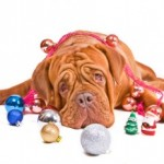 Tuesday's Top Ten:  Reasons Your Dog is Looking Forward to Christmas