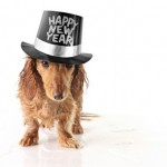 Tuesday Top Ten:  Ways Your Dog Will Celebrate New Year's Eve
