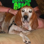 Shelter Sunday:  Homeward Bound Pet Rescue / Gilmer County, GA