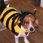 Saturday Survey:  Will Your Dress Your Dog Up for Halloween?