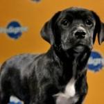 Puppy Bowl VII