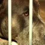 Miracle Monday:  Dog Ejected from Car Crash Suffers Only a Broken Elbow