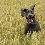 Friday Funny:  Goofy Dog Smile