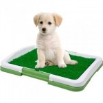 A Better Indoor Potty Patch for your dog?