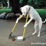 Friday Funny:  The Clean-up Crew