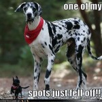 Friday Funny:  Great Dane Loses Spot