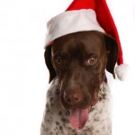 Tuesday Top Ten:  Holiday Gifts for Your Dog