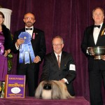 2012 Westminster Dog Show Results:  And the Winner is…