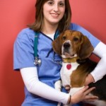 Tuesday Top Ten:  Reasons to take your dog to the vet