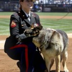 Yankees Honor War Dog