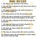 Dog Rules:  They Fade Over Time