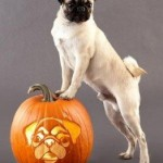 Top Five Tips to Assure a Happy Halloween with Your Dog