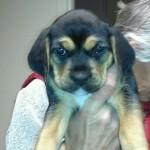 New Puppy!