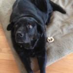 Massachusetts Dogs a Little Safer Now
