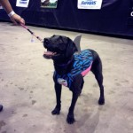 Dock Dogs World Championships