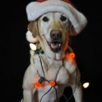 Rudolph the Red-Nosed…um…dog?