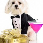 Tuesday Top Ten:  New Year's Resolutions From Your Dog