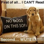 Friday Funny:  Dogs on the Sofa