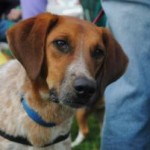 Shelter Sunday:  Tall Tails Beagle Rescue / Freeport, ME