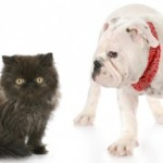 Canines versus Felines: How to Avoid Guerilla Warfare