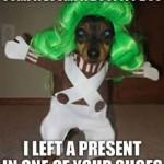 Friday Funny:  Oompa Loompa Dog