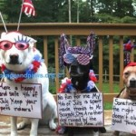 Fourth of July Reminder from Giddy, Twinkle, and Nugget