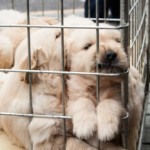 San Diego bans pet store puppies