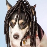 Wigs for Dogs!