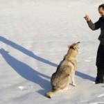 Need Help Training Your Dog?
