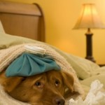 Mysterious Illness Overcoming Dogs in Ohio