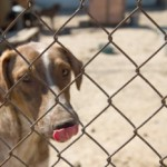 Tuesday Top Ten:  Ways to Help Your Local Animal Shelter