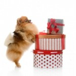 Tuesday Top Five:  Do-It-Yourself Gifts for Your Dog