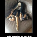 Friday Funny:  Smart Dog!