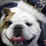 33rd Annual Beautiful Bulldog Contest