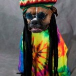 Friday Funny:  Rasta Dog