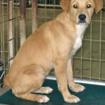 Shelter Sunday:  Brookhaven Animal Rescue League, Brookhaven, MS
