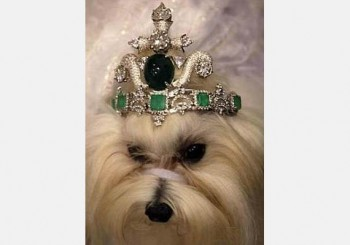 This $4.2 million dog tiara is featured on IncredibleThings.com