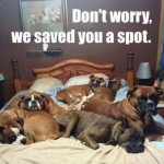 Friday Funny:  Bed Full of Boxers