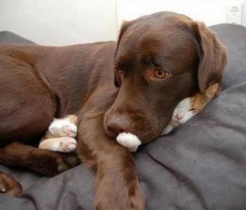 FF Kitty Pillow