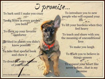 Promises from your dog