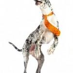 Dogs-N-Ties