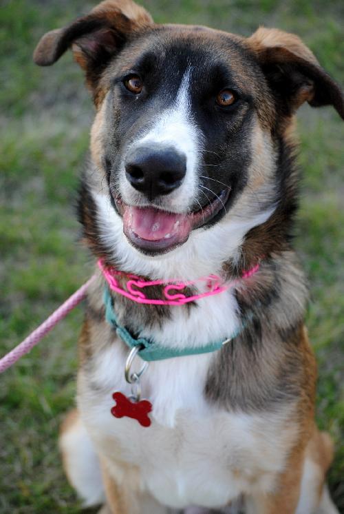 Dog Rescue Fargo Nd