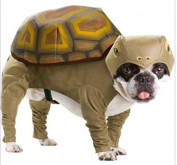 Costumes TMNT