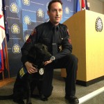 Hawk:  Calgary Police Therapy Dog